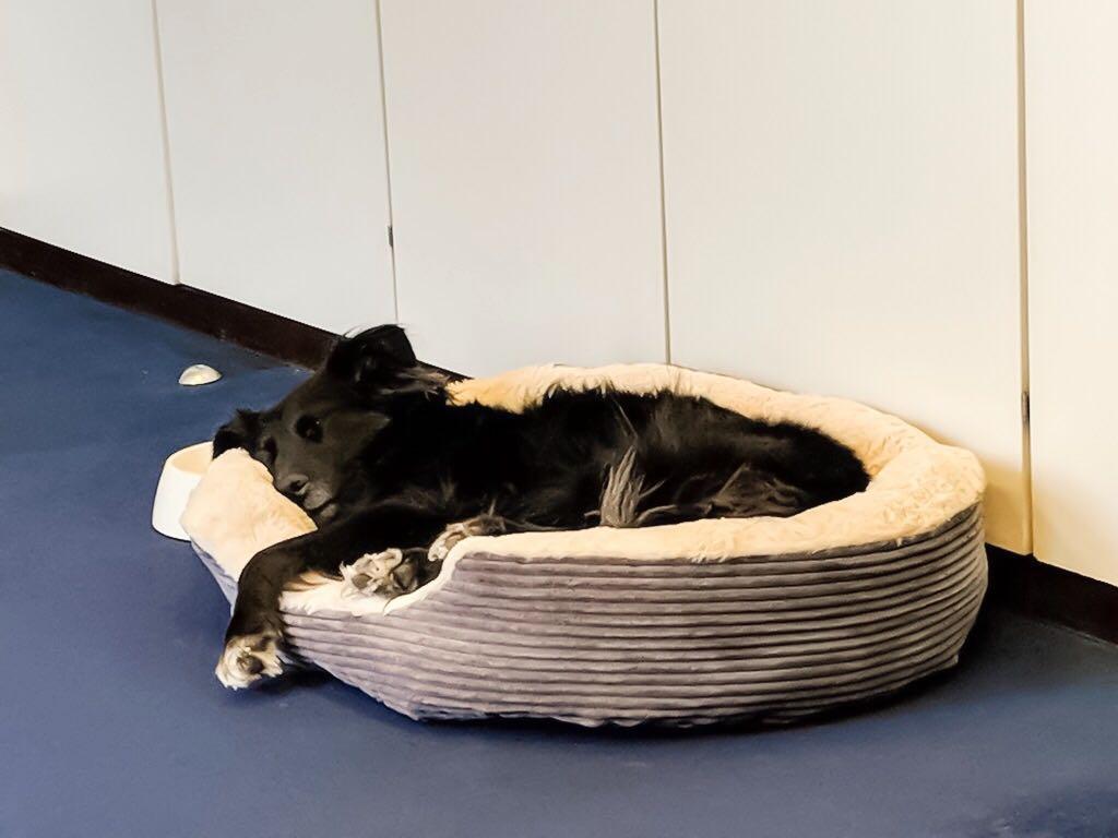 Bürohündin Emmie schläft